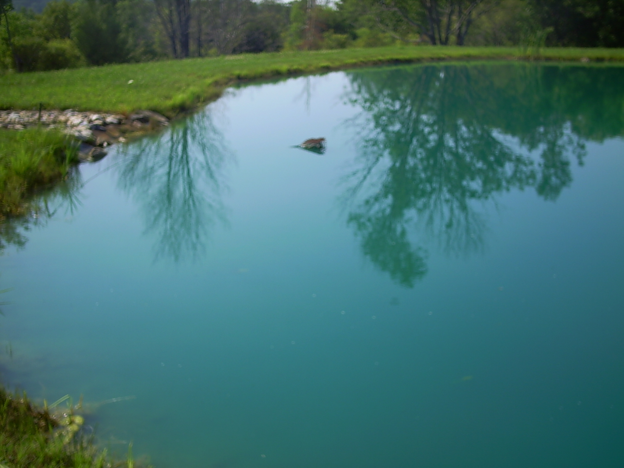 Pond Water Exit