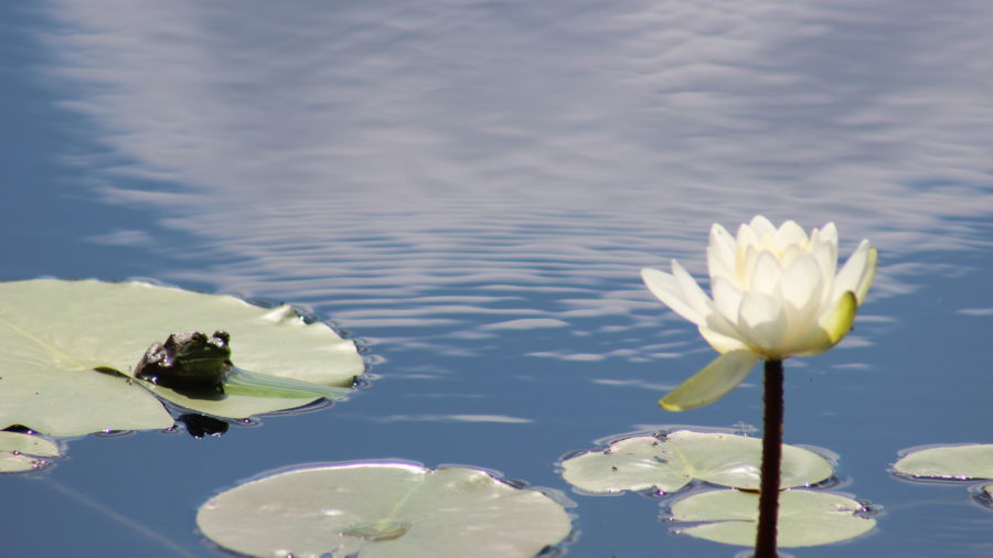 Pond Building to Pond Management Solutions.