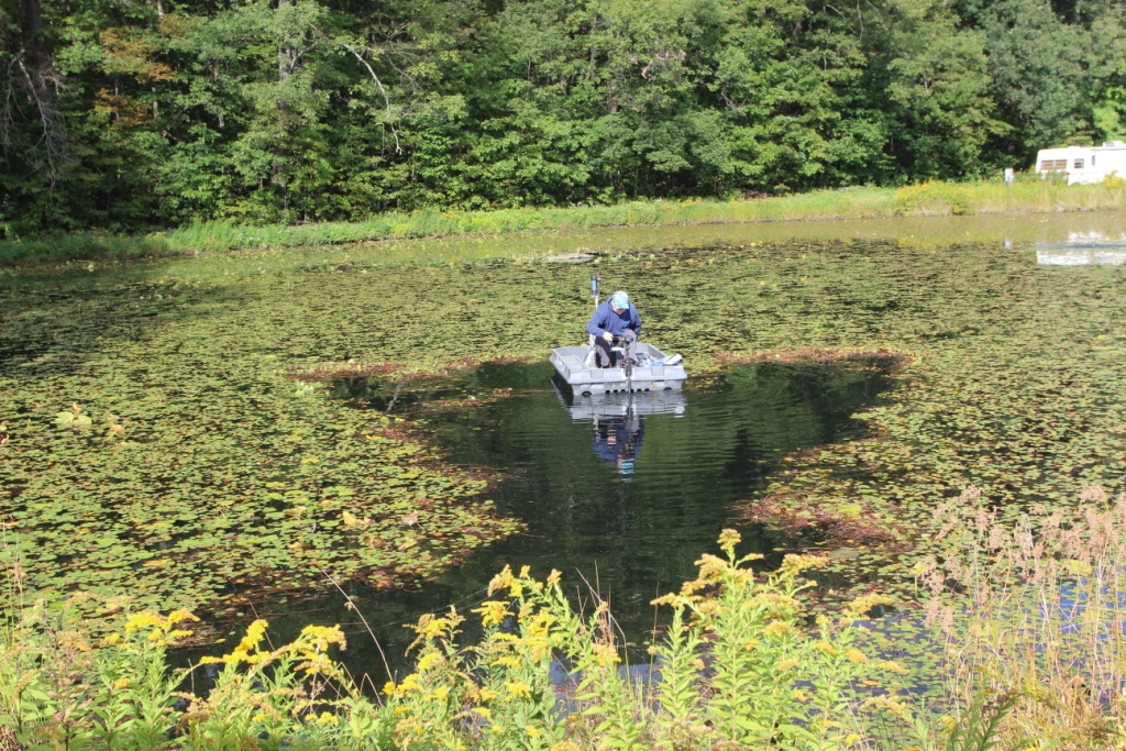 Pond Weeds Can Become Unsightly Choke Out The Pond View
