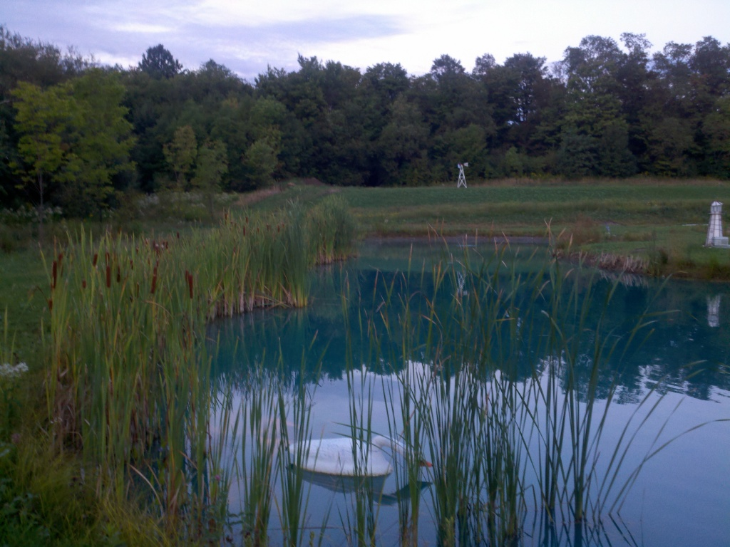 Weeding The Pond Is Simply Removing The Mass Amount Of