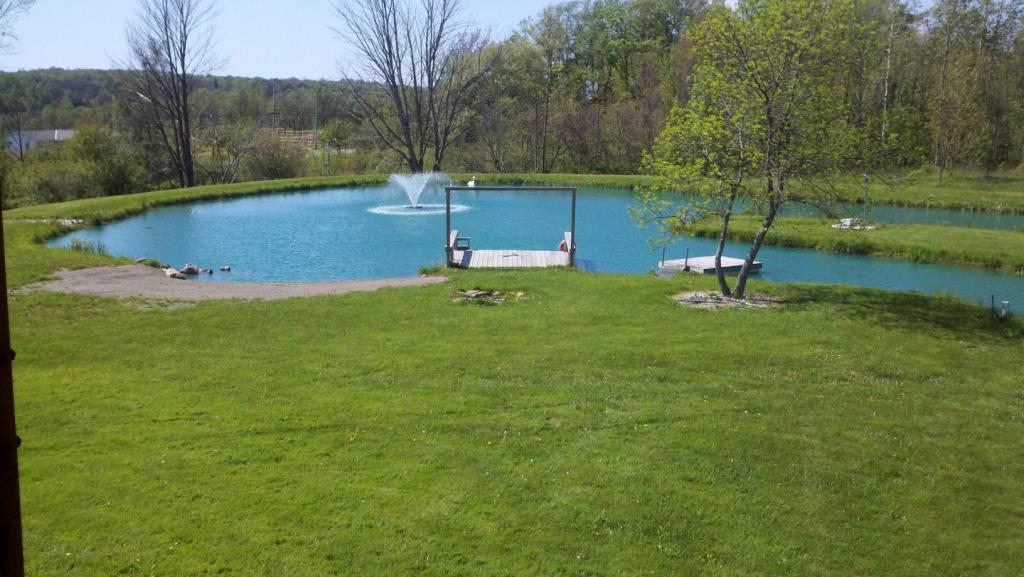 What type of pond to build take a look and discover their for Types of pond design