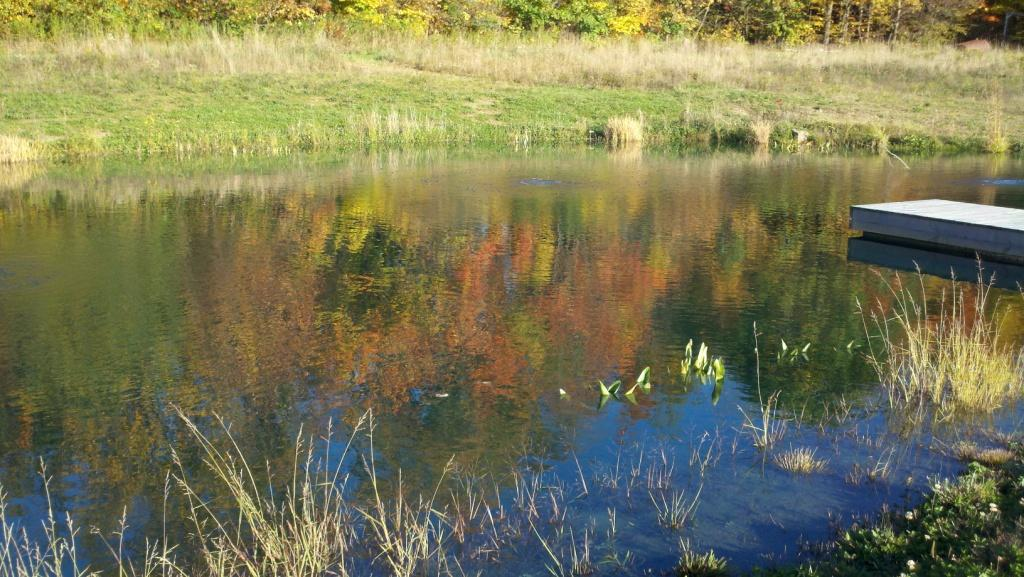Preparing the pond for winter for Preparing pond water for fish