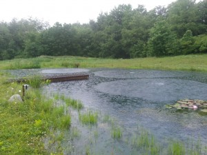 aeration in pond
