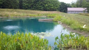 Floating Pier is down. Pond edge is shown low and lilies moved