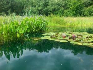 fall pond plants