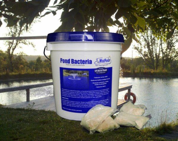 6 lbs pond clarifier pond bacteria
