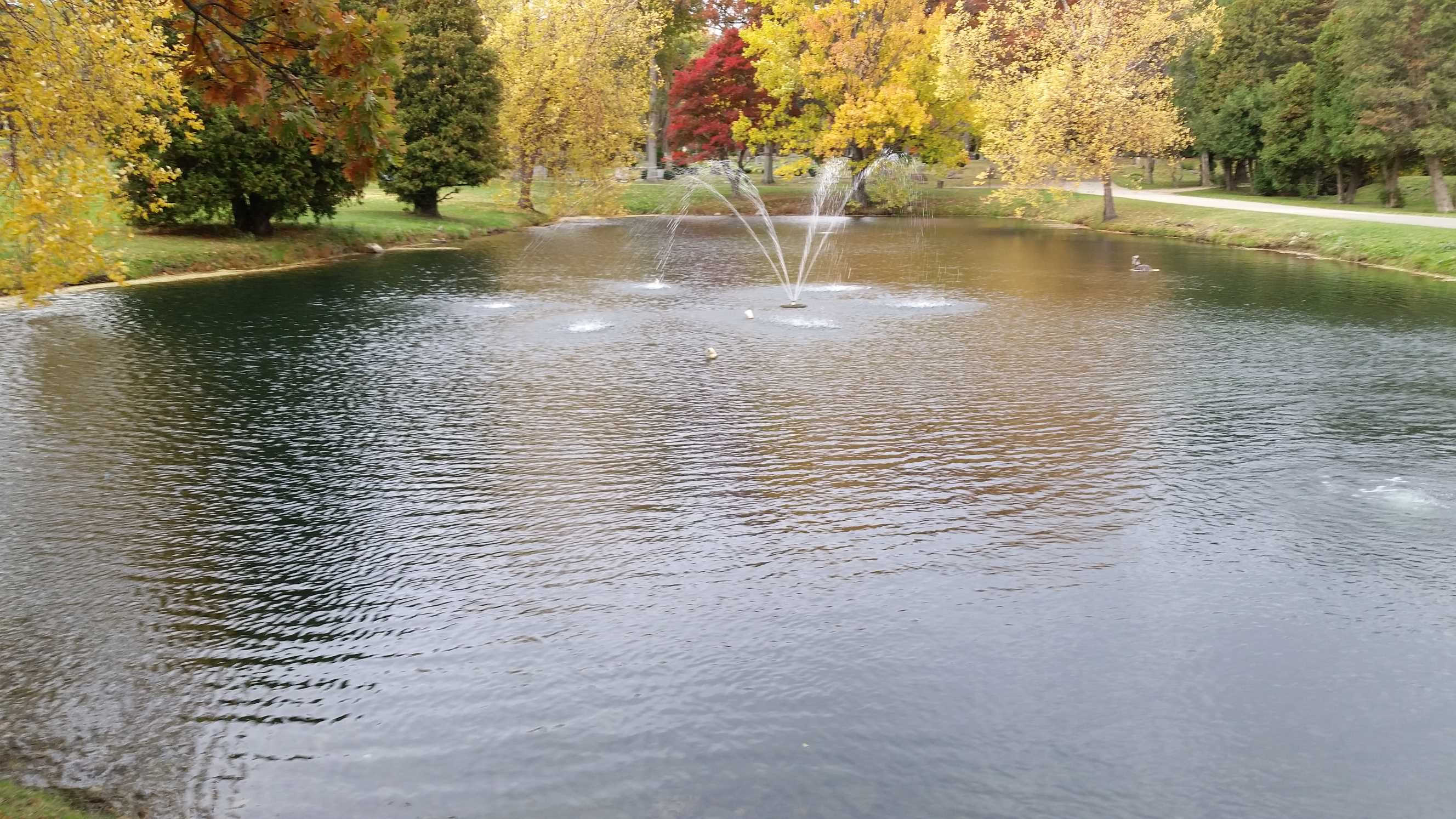 Fall 2015 after natural pond treatments