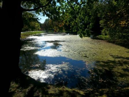 Fall 2013 pre pond maintenance