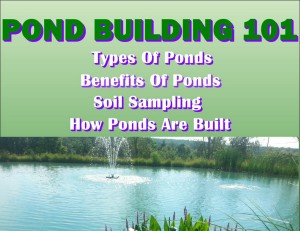 pond-build-101-small