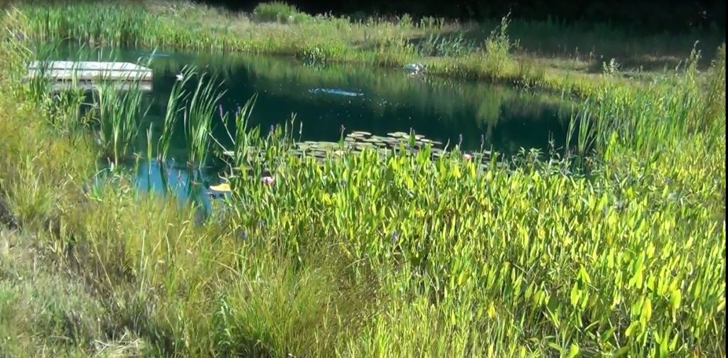 The blanket of snow sunday is a reminder to get the pond for Winter pond plants