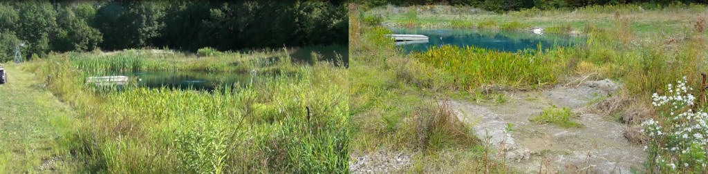 before and after thinning cattails & plants