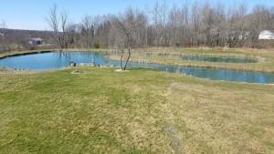 spring pond 2016