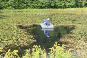 Watershield cutting with Lake Mower