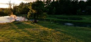 spring-pond