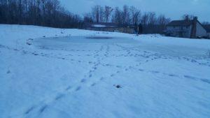 Deer Print on the Pond Ice