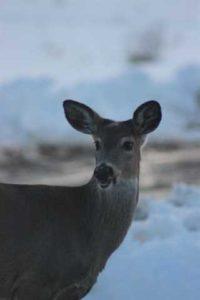Deer: Hey whats up!