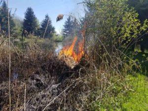 Phragmite on burning
